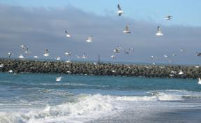 gull-2.jpg