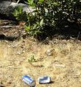 trash-3.jpg