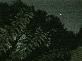 tree-and-moon.jpg
