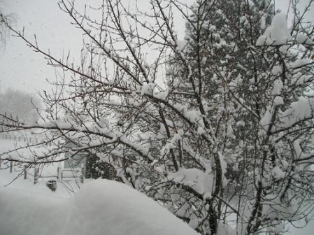 snow-morning