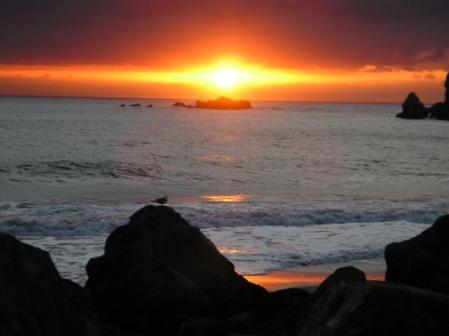 sunset-and-bird