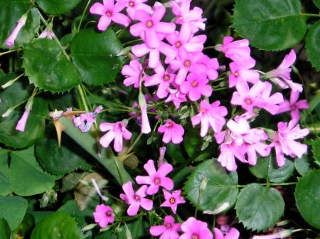 flowers-lavender