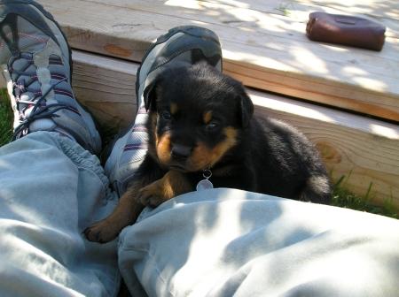 Dakota-relaxing-on-my-leg
