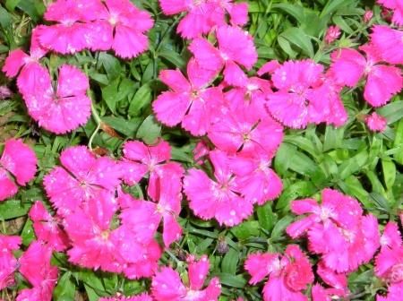 flowersdewey