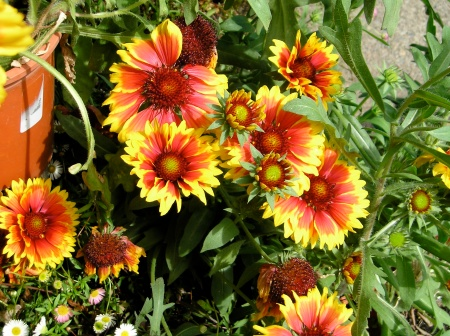 redd,yellow florers